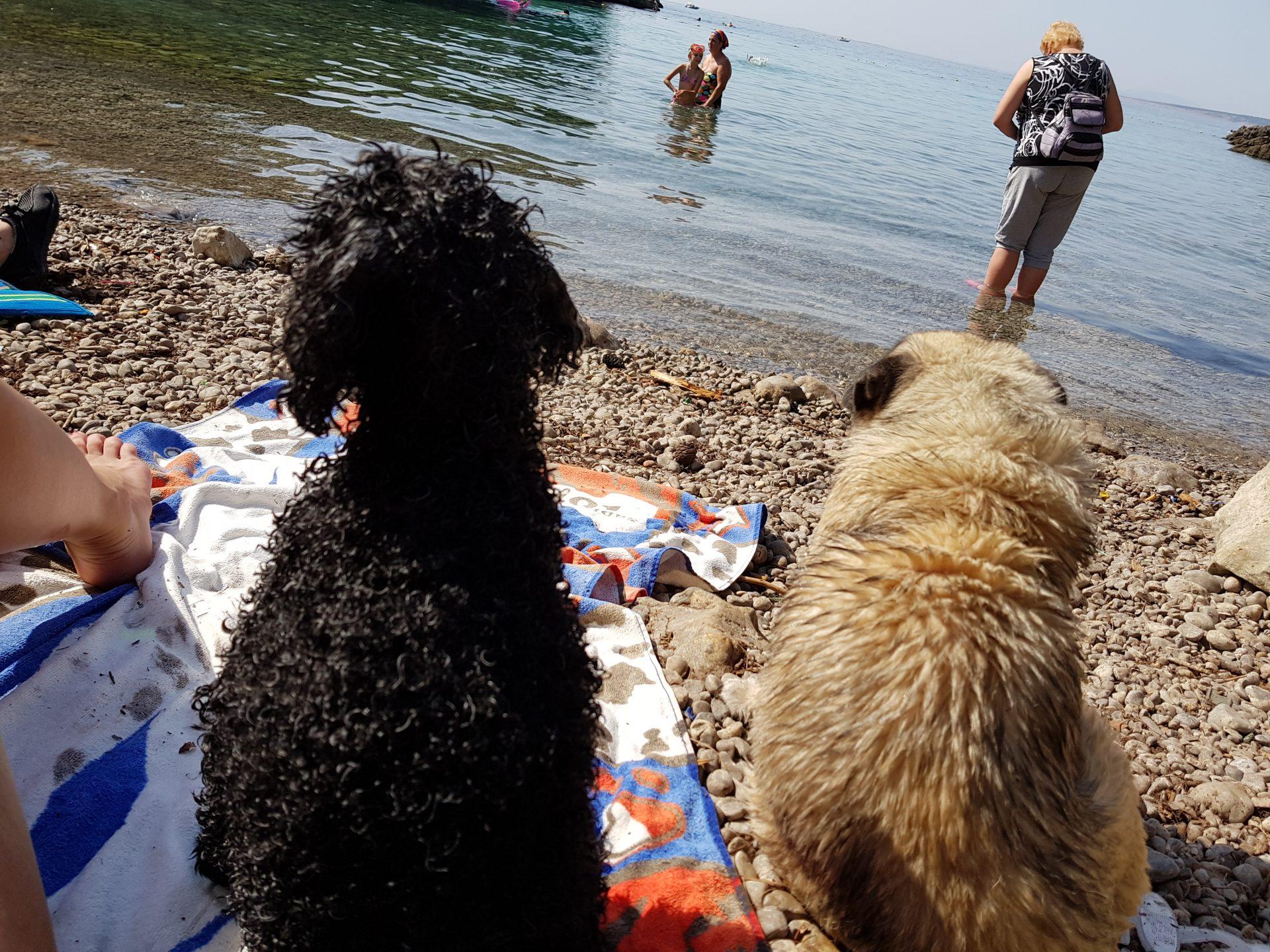 Cani che fanno amicizia in spiaggia